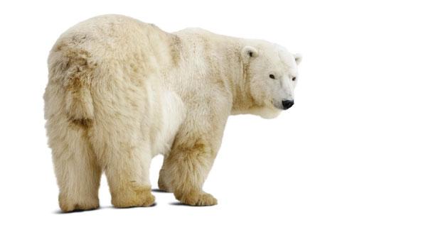 kauppapolitiikka_3_15_arktinen5