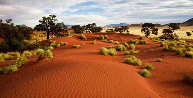 Namibia, Afrikka, akaasiat