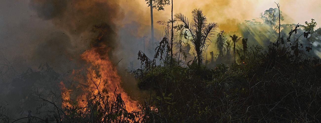 Amazonin sademetsä palaa